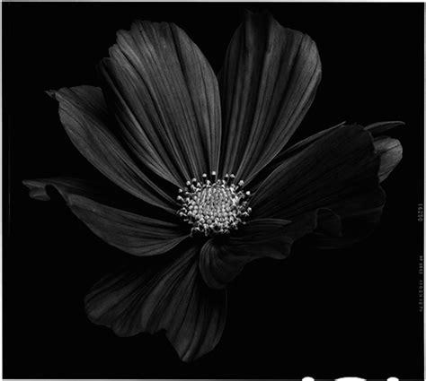 black flowers amazing   bettina gueber