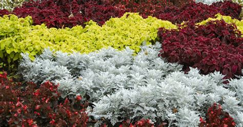 low maintenance flower beds exles of low maintenance part shade flower beds ehow uk