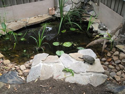 turtle pond ideas outdoortheme
