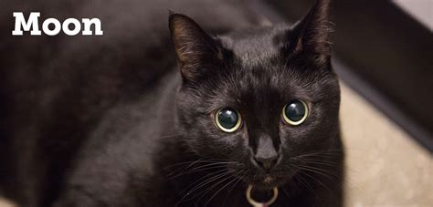 black cat black cat appreciation day is today the kittycatclan