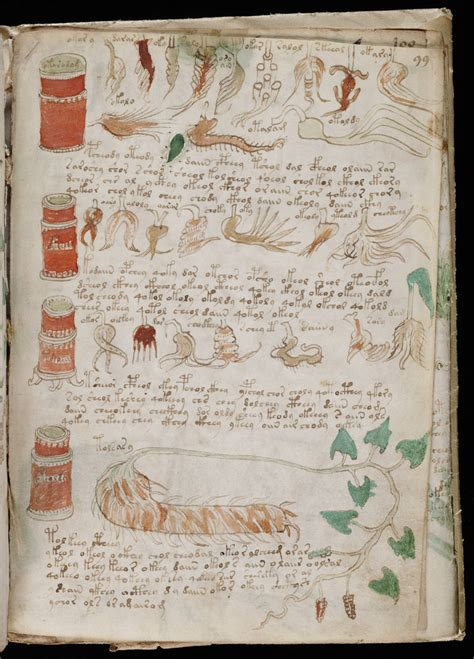 Library Office by File Voynich Manuscript 175 Jpg Wikimedia Commons
