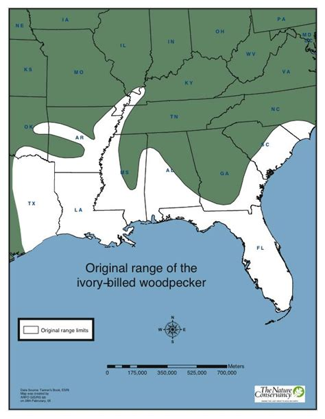 follow the piper ivory billed woodpeckers