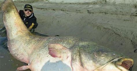 Pancing Lele 6 umpan mancing ikan lele malam hari