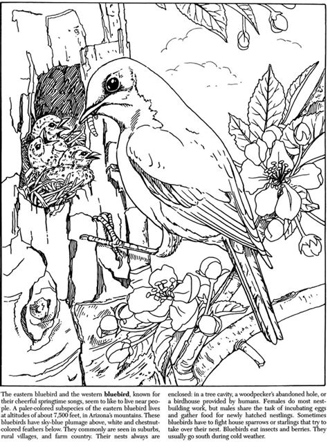 coloring book publishers coloring pages for dover publishing coloring