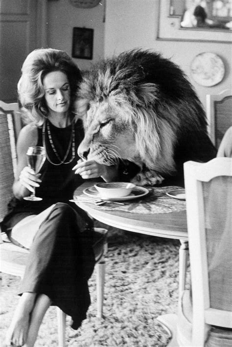 lion film melanie griffith 77 best images about tippi hedren on pinterest mothers