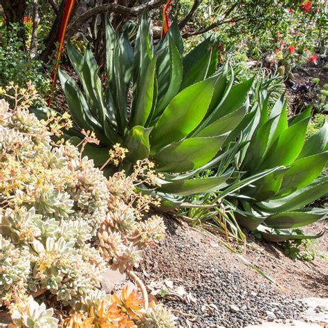 bay area succulents archives cactus jungle