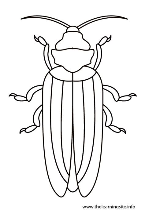 insect templates bug coloring template coloring pages