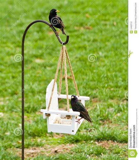 feeding backyard birds stock photography image 14452712