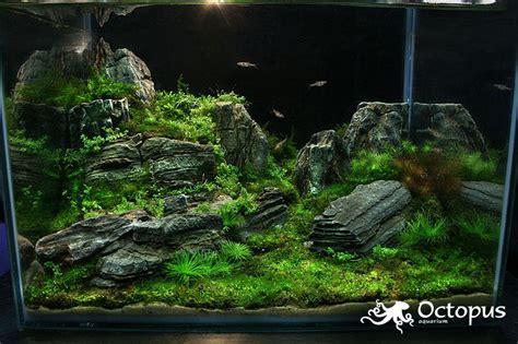 Aquascape Plants List by Slobodan Lazarevic The Land Of Lost Dreams