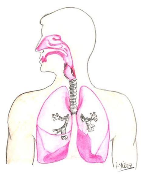 imagenes del sistema respiratorio ingles el aparato respiratorio blogmedicina