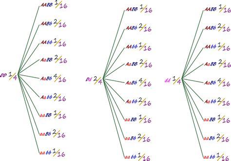 escribir cadenas en c ciencias de joseleg formaci 243 n de la f2 en el trih 237 brido