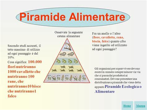 esempio di catena alimentare ecosistema primi passi con powerpoint gruppo di lavoro