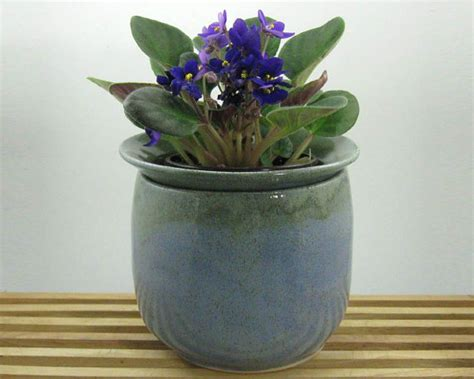 Violet Planter by Violet Pot 2 Pc Self Watering Planter By Justmare