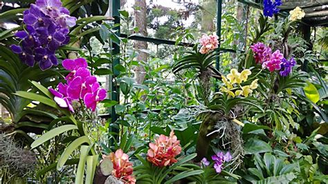 Indoor Botanical Gardens - national orchid garden of singapore travel guide