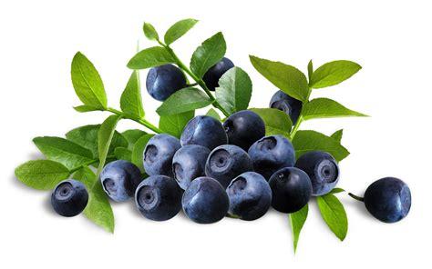 blueberry wallpaper blueberry computer wallpapers desktop backgrounds