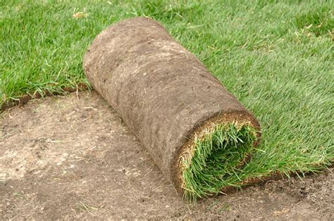 grass sod laying college station trim pro lawns