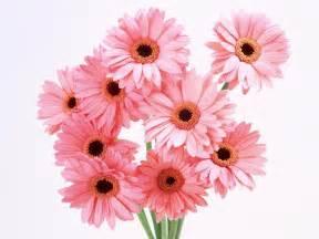 beautiful flower flowers for flower lovers beautiful flowers wallpapers