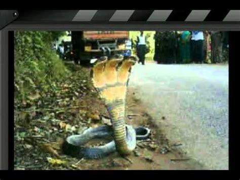 film ular berkepala 7 ular kobra berkepala 3 youtube