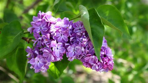 sfondo fiori primaverili sfondi primaverili 68 immagini