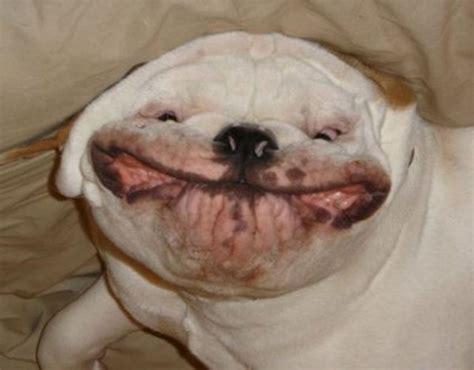 happy dogs happy 1funny