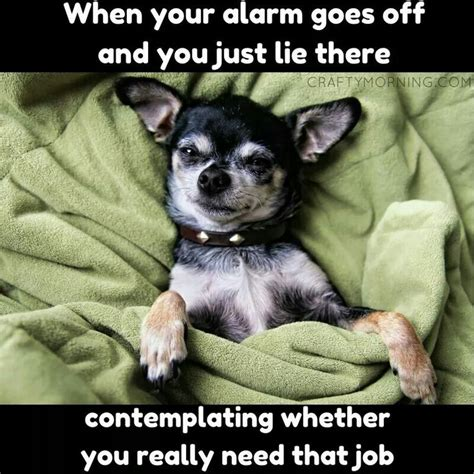 Funny Chihuahua Memes - best 25 chihuahua meme ideas on pinterest