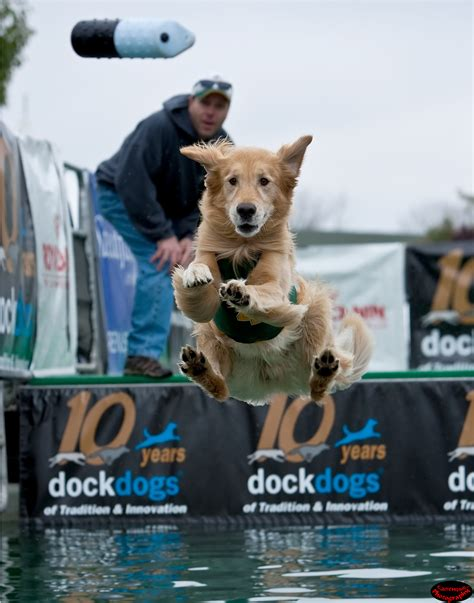 dock dogs dock jumping classes at rummy s club houston pettalk