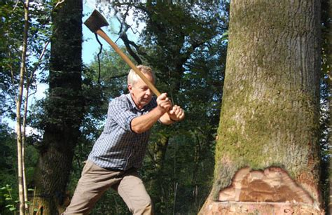 felling ax one tree wholewoods