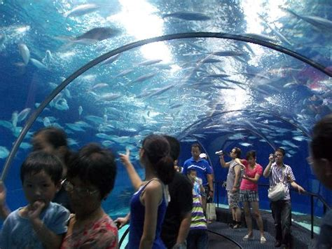 Lu Tanning Aquarium guide to shanghai for families travel guide on tripadvisor