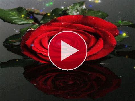 imagenes de rosas sangrientas gif destellos sobre una rosa roja gif 4700