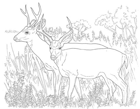 coloring pages animals deer animal coloring pages mule deer coloring pages