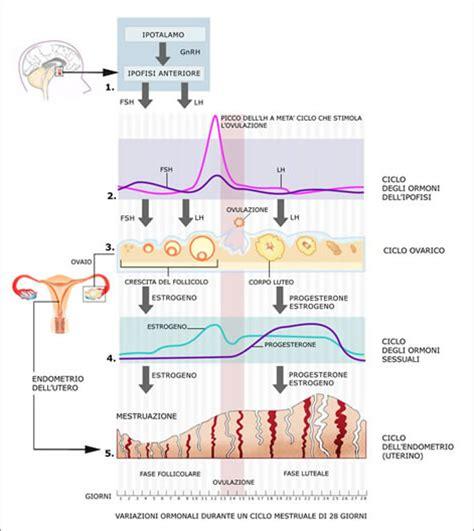test prima ciclo ormoni pagina 4 di 9 ester veronesi