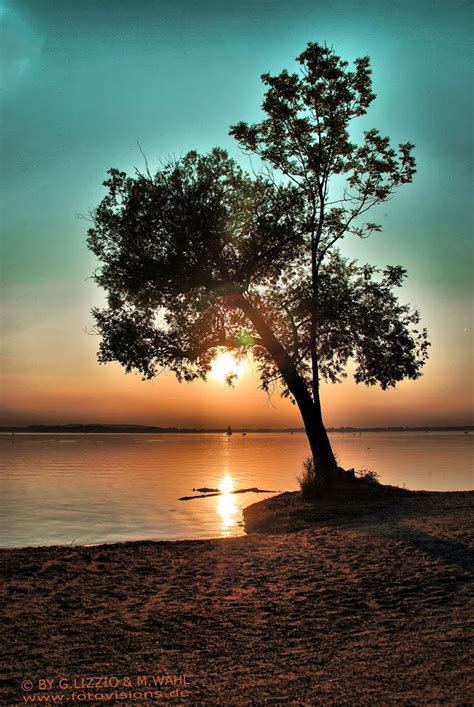beautiful tree panoramio photo of beautiful tree beautiful sunset