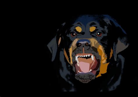 givenchy rottweiler rotweiler wallpapers wallpaper cave