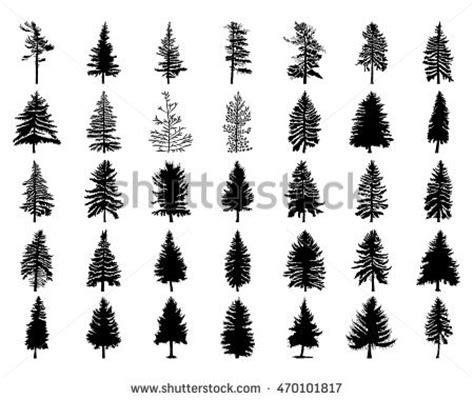 jack pine tree silhouette www pixshark com images