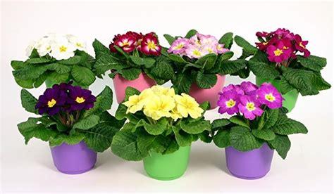 immagini vasi di fiori vasi di fiori composizioni di fiori variet 224 vasi di fiori