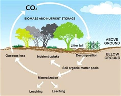 carbon sequestration:a process of capture and storage of