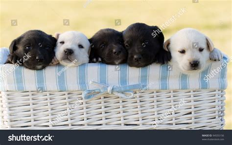 how to care for newborn puppies and their image gallery newborn puppies