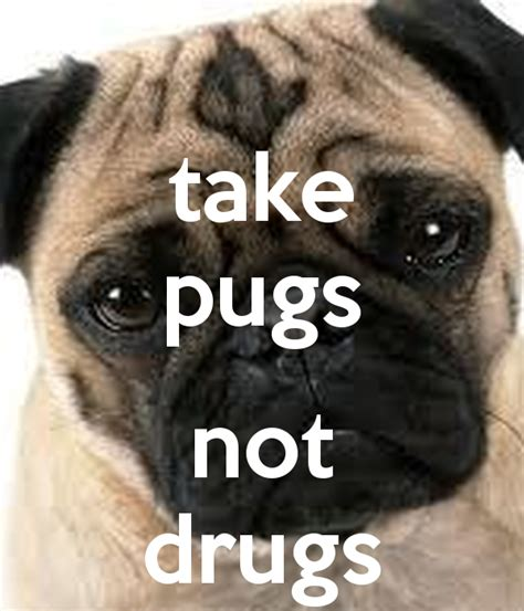 pugs and drugs pugs not drugs memes
