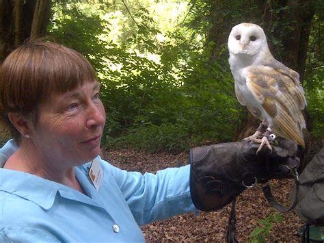 Barn Owl On Arm Barn Owl Boxes Are Go Compton Verney Grounds Blog
