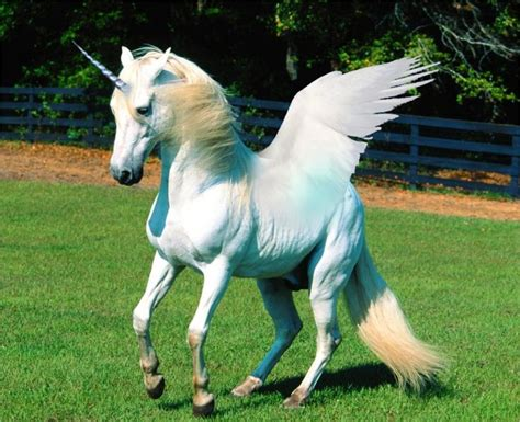 imágenes de unicornios verdaderos unicorns history magic myth and symbolism in5d