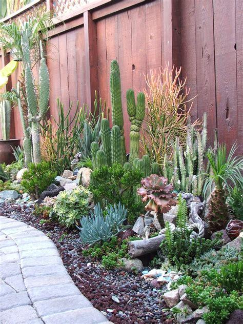 under the sea garden in my backyard has succulents cactus aloe seashells driftwood