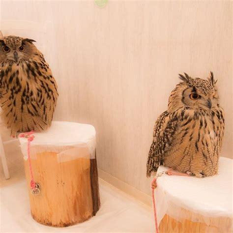Jp Burung Hantu 1 pet cafe terbaru jepang menuai kritik lihat deh 10 gambar