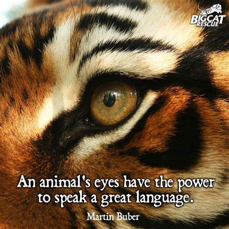 tiger quotes tiger animal quotes quotesgram