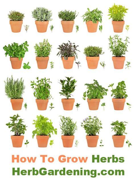 learn   grow   herb garden indoors