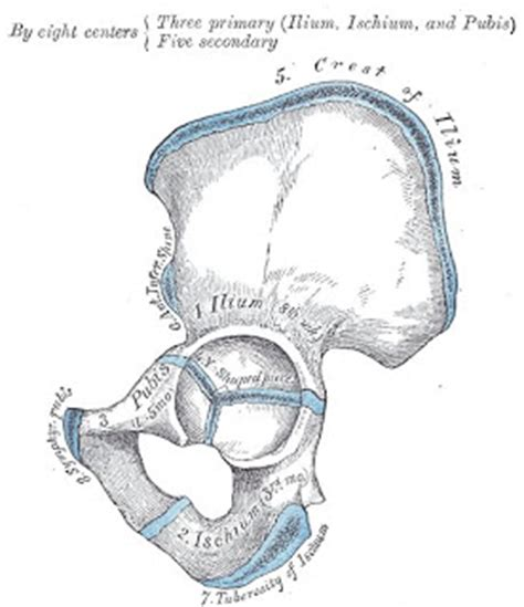 iliac crest diagram crest of ilium welcome to crest of ilium