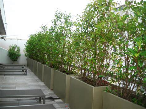 Exceptionnel Plante Brise Vue En Bac #1: brise-vue_1.jpg