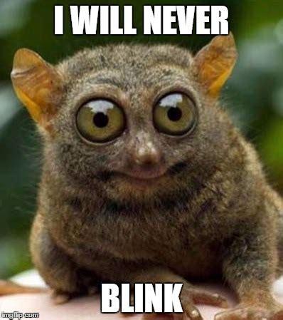 meme eyes 100 images keep your eyes peeled meme on