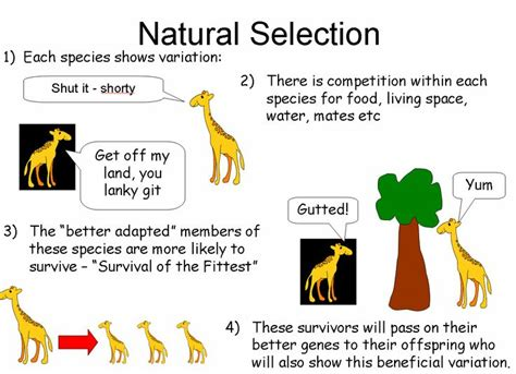 lectures on evolution essay 3 from science and hebrew tradition books darwin and lamarck powerpoint a summary of lamarck s and