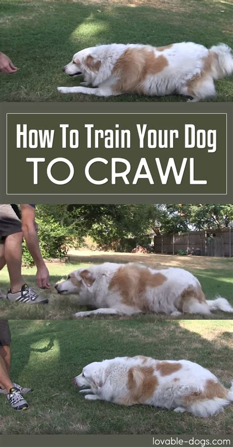 how to house break your dog lovable dogs how to train your dog to crawl lovable dogs