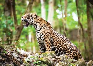 National Geographic Jaguars Esteros Iber 225 National Geographic Best Trips